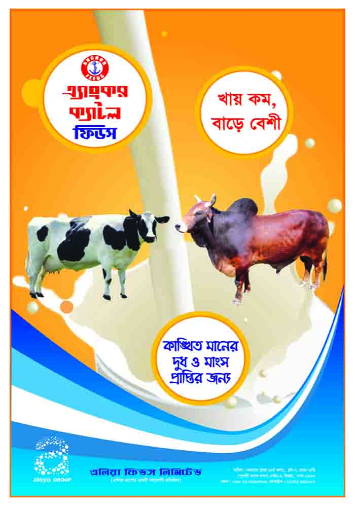 Anchore Cattle Feeds